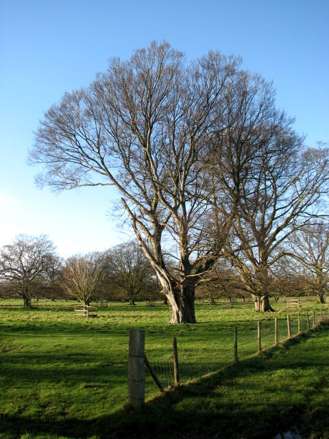View across pasture