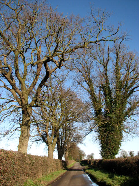 Old trees line the road to Ingworth