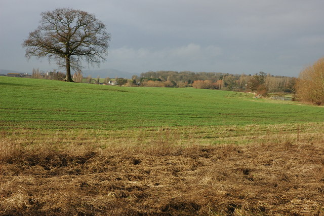 Tree in field beside Bourne Brook