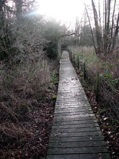 Boardwalk across swampy ground