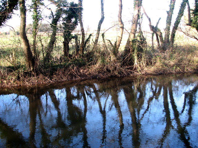 River Bure - reflections