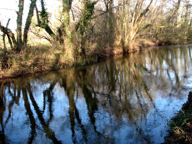 Downstream view with reflections of trees