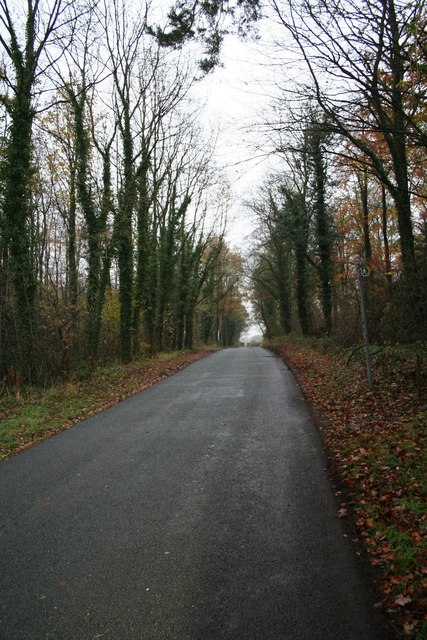 The Road to Plas Buckley