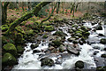 SX5363 : Meavy: river Plym : Week 1