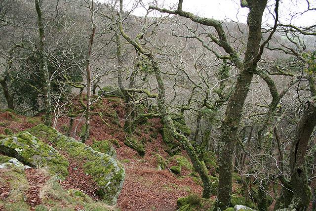 Meavy: Dewerstone Wood