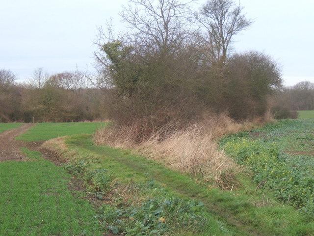Fields near Tarston Hall