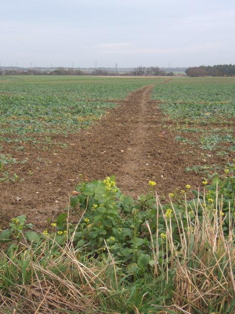 Muddy track across the fields towards Needham Market