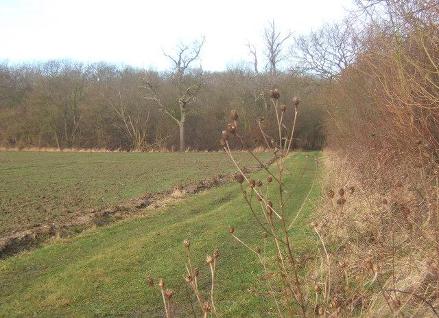 Path towards Bonny Wood near Barking, Suffolk