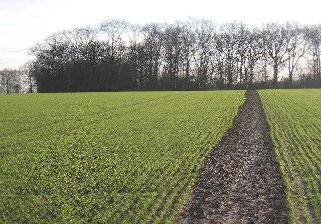 Path towards tip of Bonny Wood