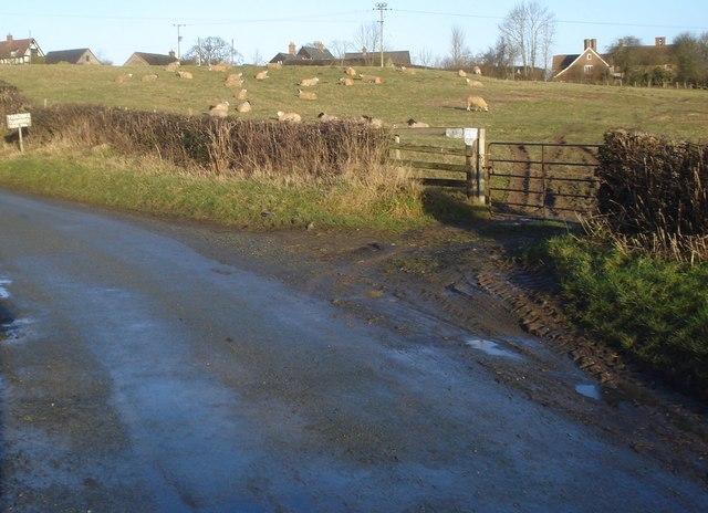 Sheep field at Abcott