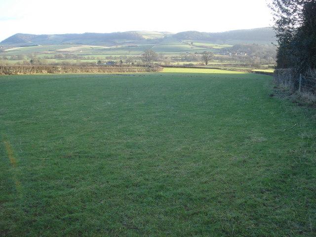 Grassland above Abcott