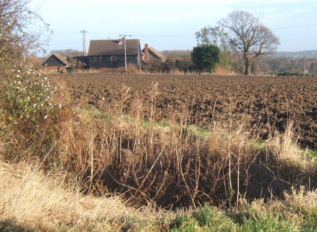 Field scene, Barking Tye