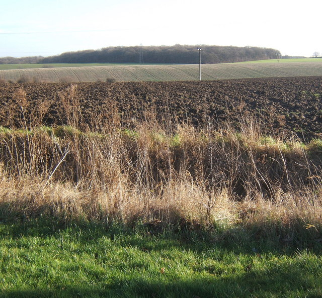 Fields near Barking, looking to Swingen's Wood in the next square
