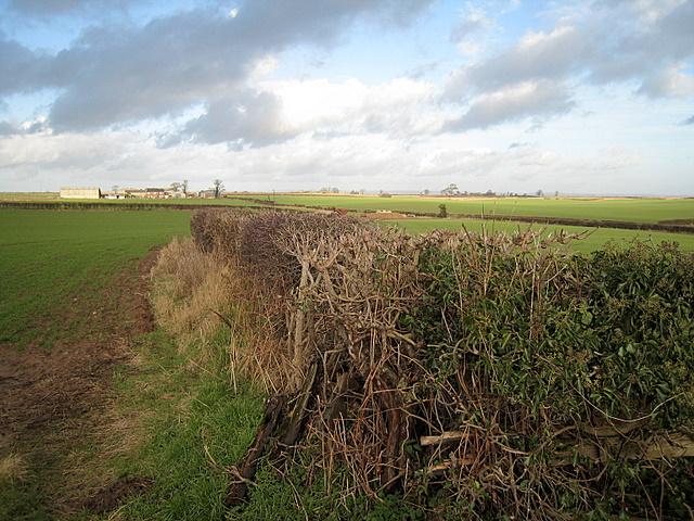 View Towards Fair View Farm, Whixley