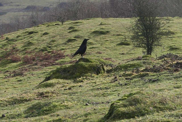 Crow and Ant Hills on Hangmans Hill