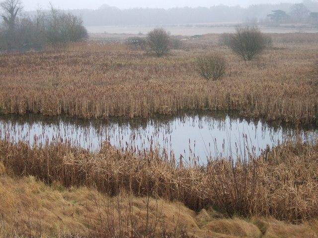 Lake and marsh below the dam at Hardwick Village