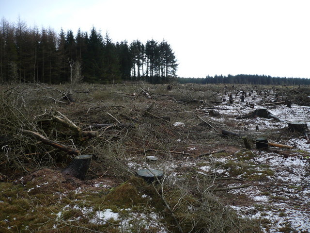Cleared forestry on Allerston High Moor