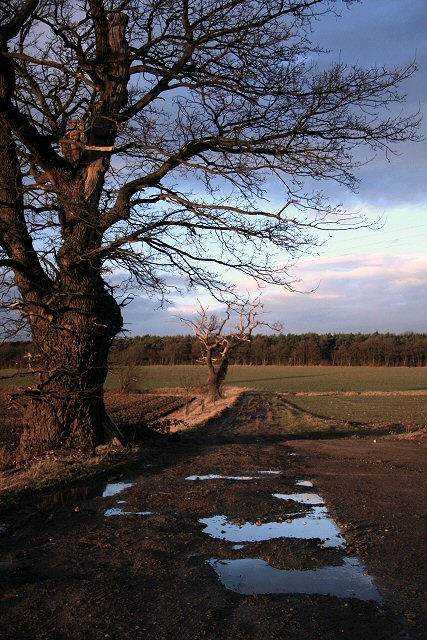 Muddy track in Little Saxham