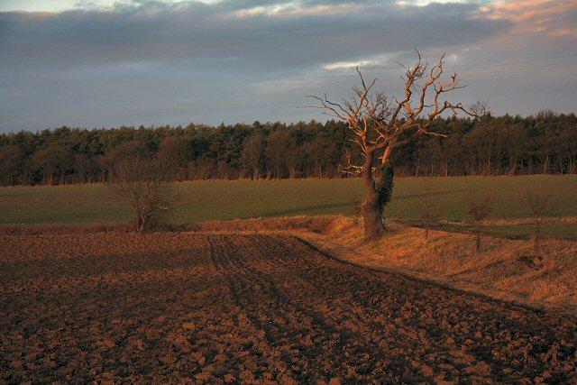 Farmland in Little Saxham