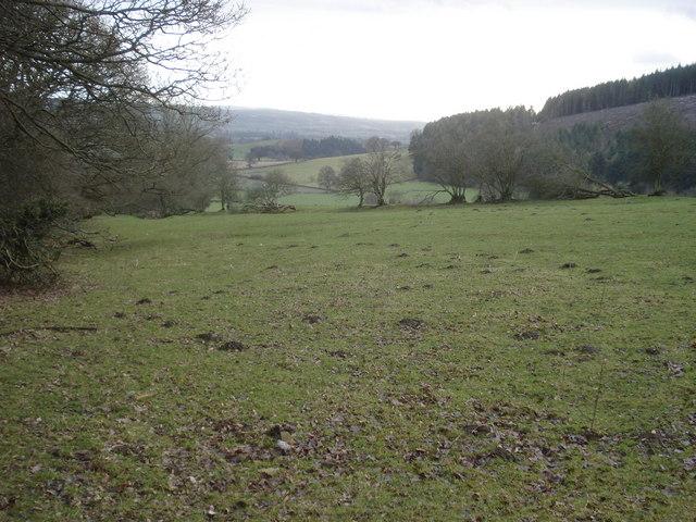 Open grazing land near Hill Coppice