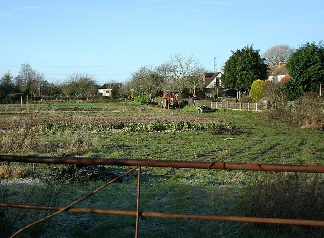 2008 : Field  at Little Marsh