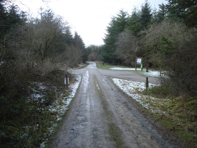 Forest track in Hopton Wood