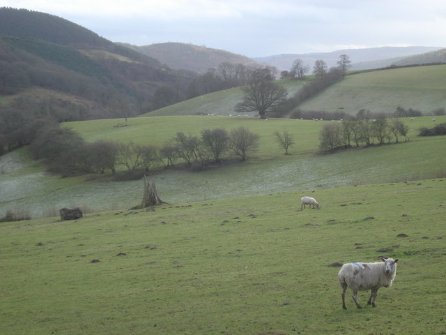 Sheep pasture south of Obley