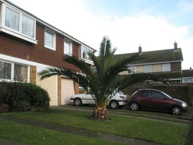 Lovely tree near Bosham Station