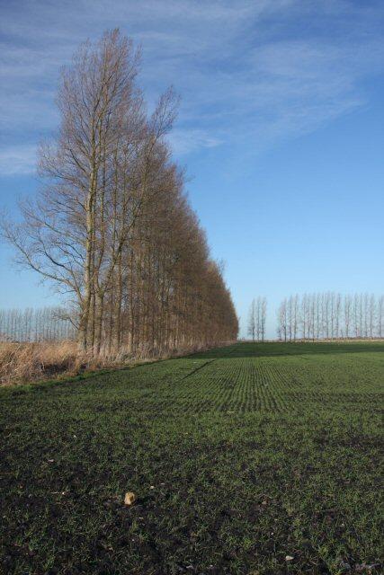 Poplars at Feltwell Anchor