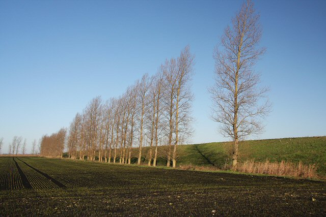 Poplars and reservoir at Feltwell Anchor