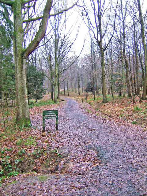 Forestry road & bridleway leading from car park in Wyre Forest