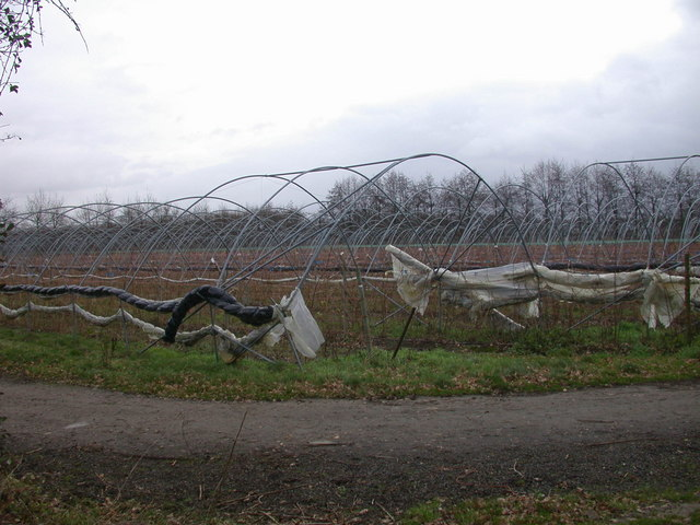 Polytunnels in winter