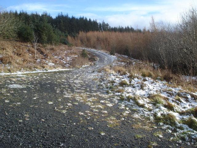 Forest track junction on Black Hill
