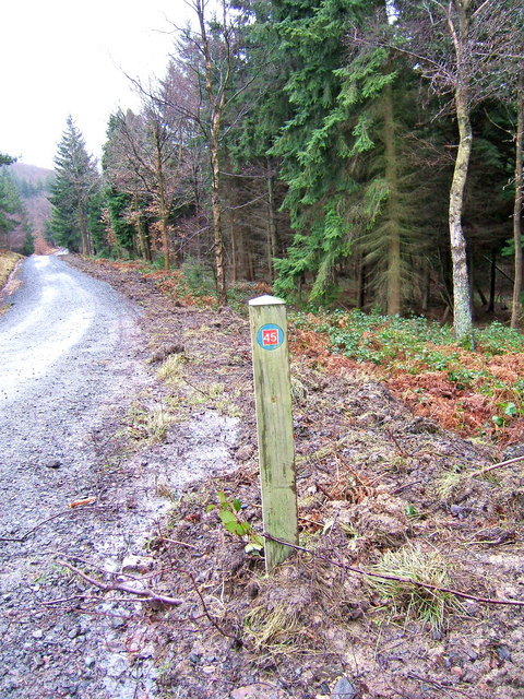 National Cycleway Network Marker Post in Wyre Forest