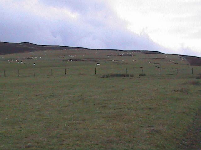top pasture