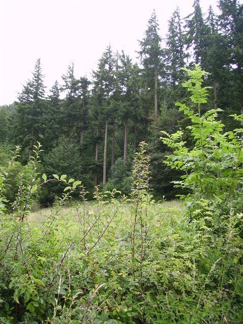 Wythop Woods