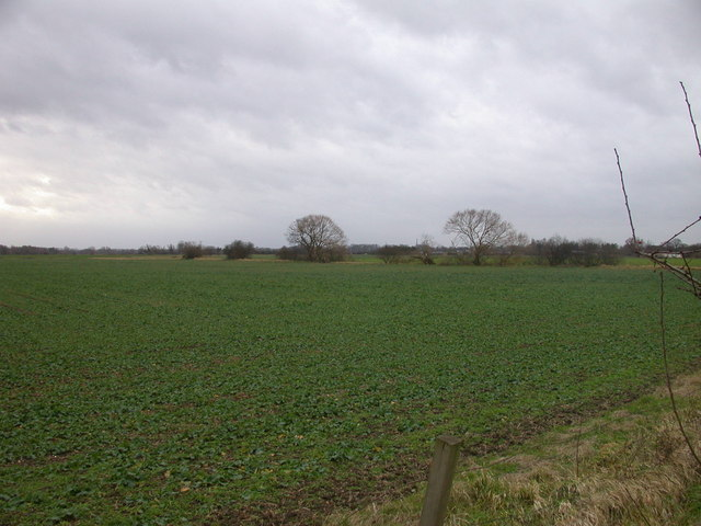 Field of young rape near the A10