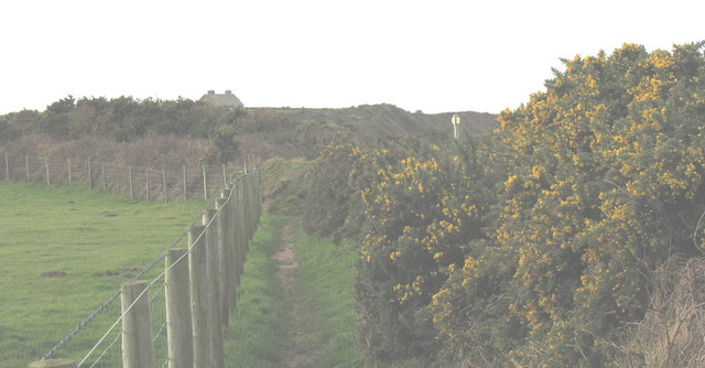 Tall gorse alongside the cliff top path