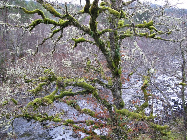 Tree with moss