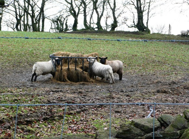 Sheep farming in Cefn Rhyswg