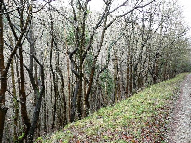 Track into Cwm Gwyddon