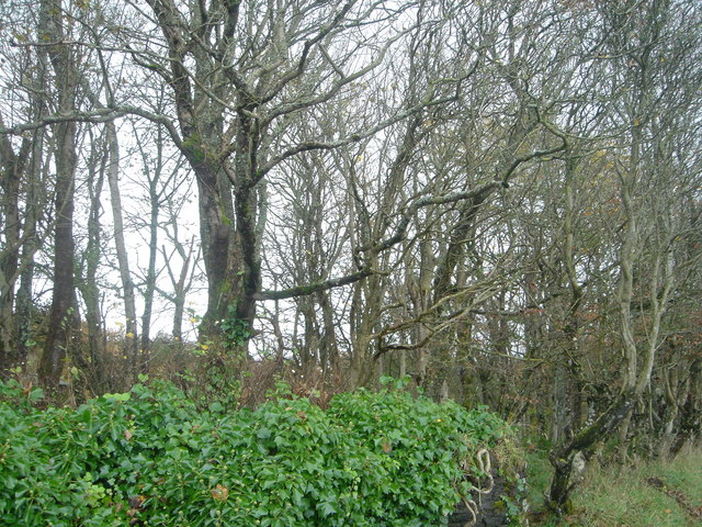 Policy woodland at Sackville
