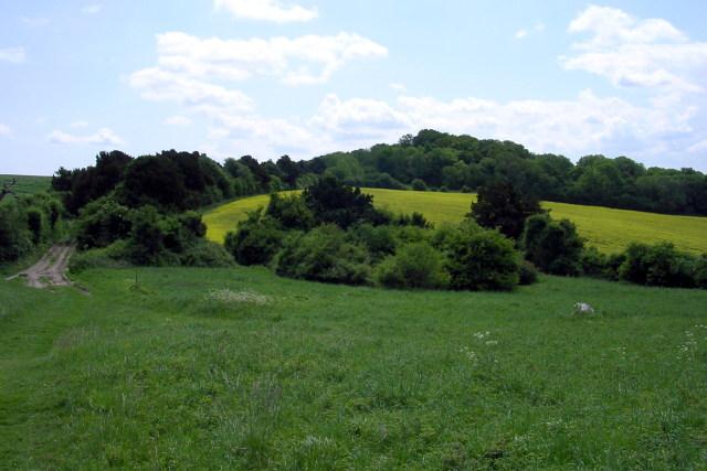 Field south-east of Mizmaze Wood
