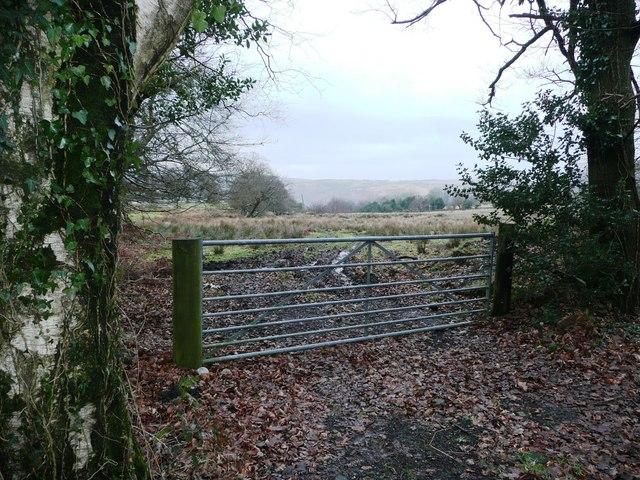 Pasture above Abercarn