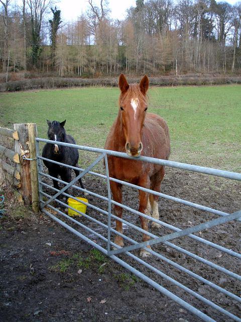Hopeful horse and pony near Vaynor Park