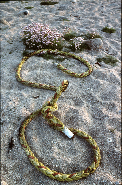 Washed-up rope