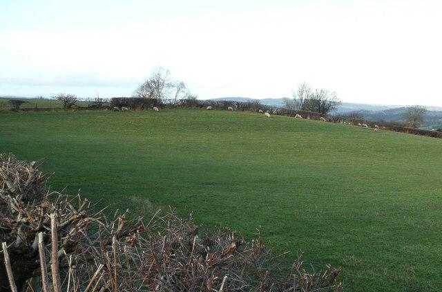 Sheep pasture north of Warbury