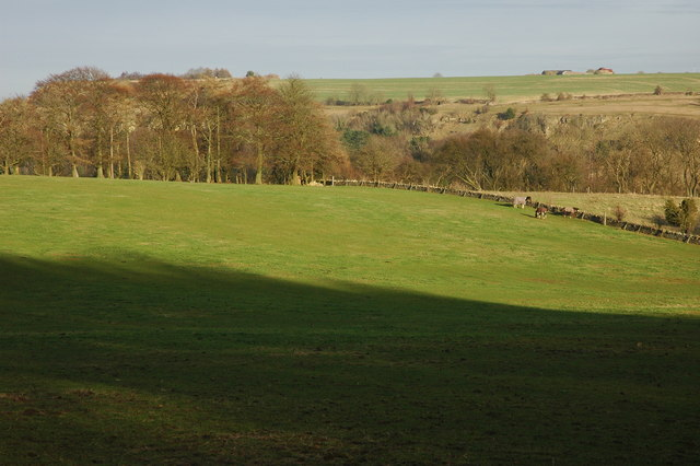 Field on Shurdington Hill