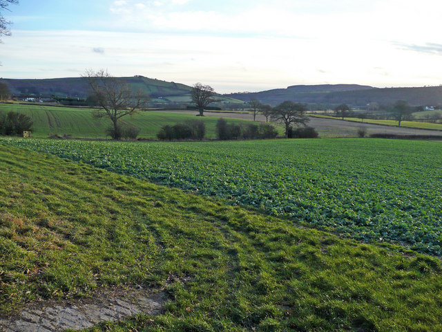 Arable land north of Little Brampton