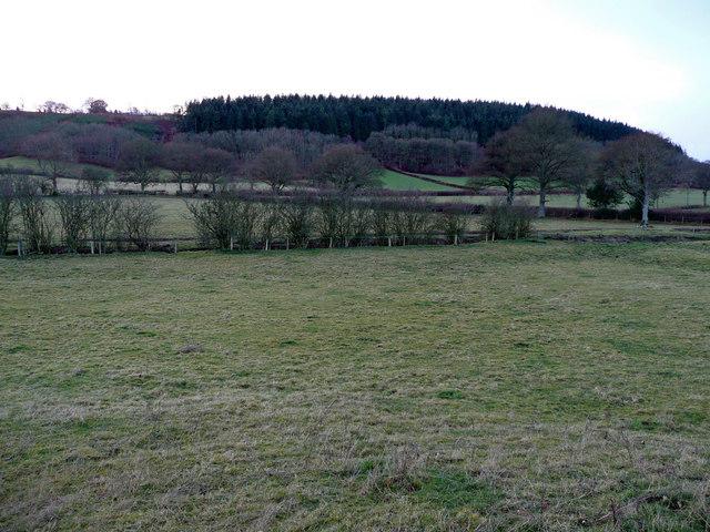 Purslow Wood